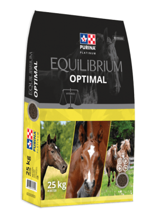 Equilibrium Optimal